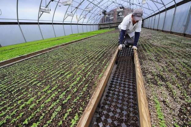 Rosyjskie embargo jna import warzyw est sprzeczne z zasadami Światowej Organizacji Handlu /AFP