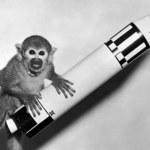 Rosyjskie małpy polecą na Marsa