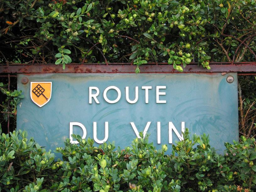 Route du Vin - to tu maniacy tego trunku spędzają całe tygodnie wakacji /123RF/PICSEL