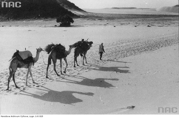 """Karawana Kazimierza Nowaka na Saharze, 1936, Algieria. <a href=""""http://audiovis.nac.gov.pl/obraz/228834/cb88bd2aa161703604e3b4b82f64422e/"""" target=""""_blank"""">Zobacz to zdjęcie w zbiorach NAC</a>"""