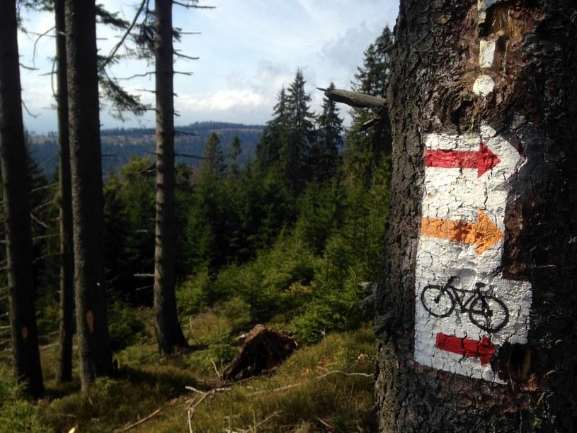 Rowerem na Turbacz? Czemu nie! Dla cyklistów także wyznaczono szlaki /JT /INTERIA.PL