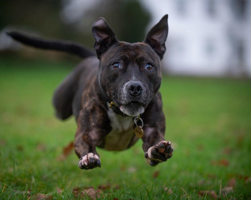 Roxy jest niezykłym psem, pomaga zwalczać terroryzm /Cover Images/East News /East News