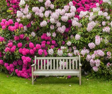 Różaneczniki: Uprawa i pielęgnacja