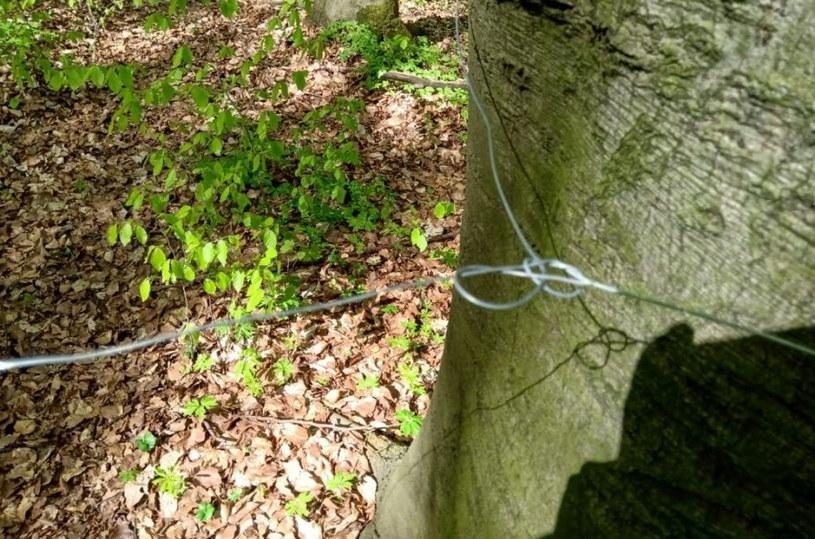 Rozciągnięte w lesie stalowe linki /Policja