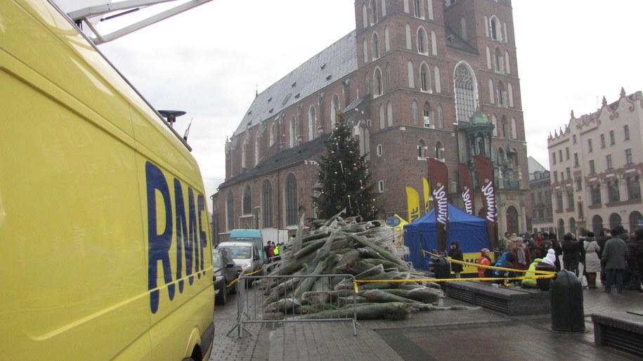 Rozdajemy pachnące choinki na Rynku Głównym w Krakowie /Józef Polewka /RMF FM