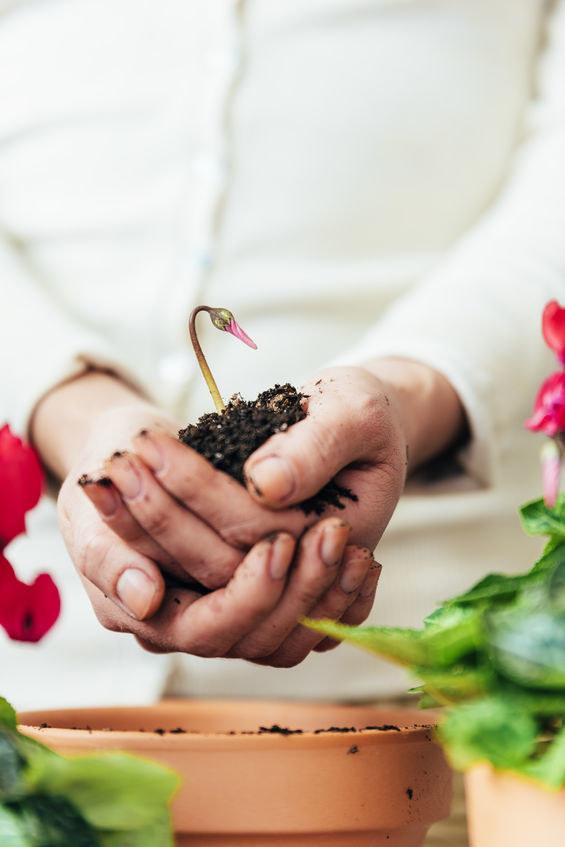 Rozmnażanie rośliny /©123RF/PICSEL