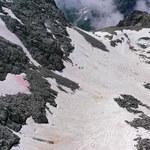 Różowe lodowce we włoskich Alpach