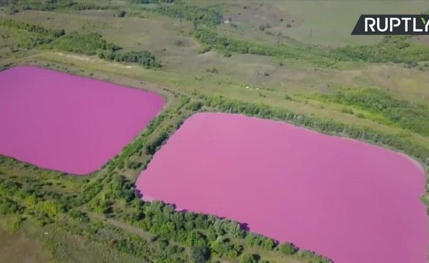 Różowe stawy. Wina chemikaliów lub zasługa glonów