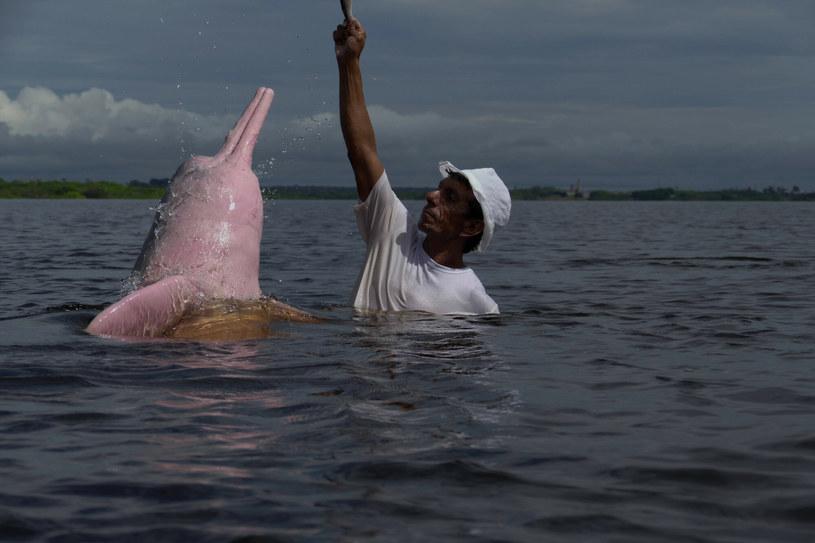 Różowy delfin zachyca bajkowym wyglądem /Sandro Pereira via www.imago-images.de/Imago Stock and People/Ea /East News