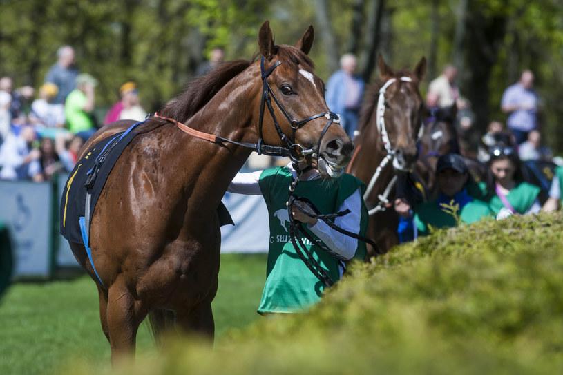 Rozpoczyna się sezon wyścigów konnych na Służewcu /Szymon Starnawski/Polska Press /East News