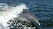 Rozpoznawanie delfinów po gwizdaniu