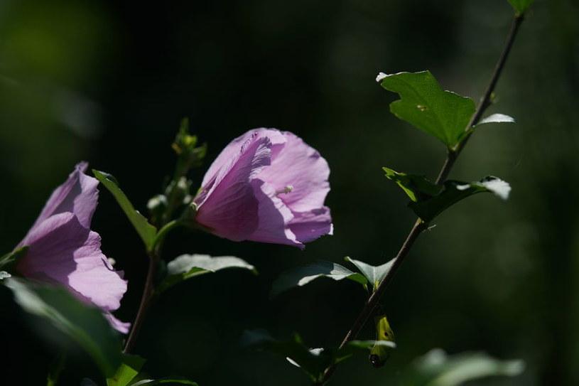 Rozwijający się kwiat /©123RF/PICSEL