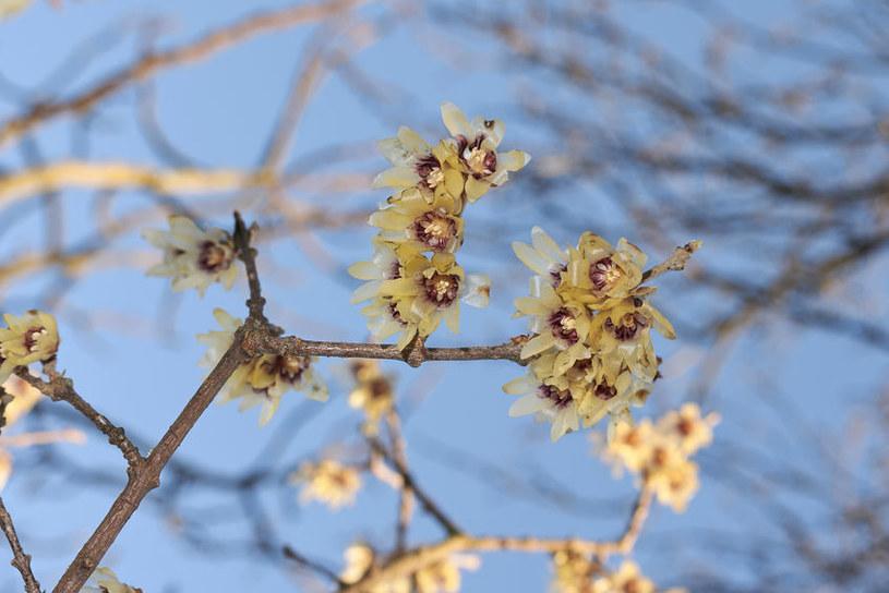 Rozwinięte kwiaty /©123RF/PICSEL