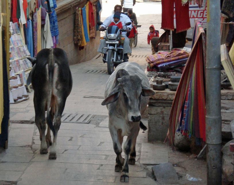 Ruch uliczny w Jaisalmerze /Artur Wróblewski /INTERIA.PL