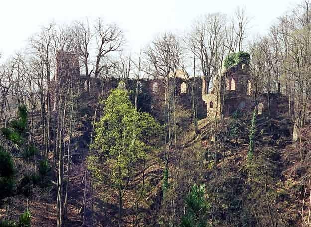 Ruina sztucznej ruiny, czyli Alte Burg Fürstenstein, zwany dziś Starym Książem. /Odkrywca