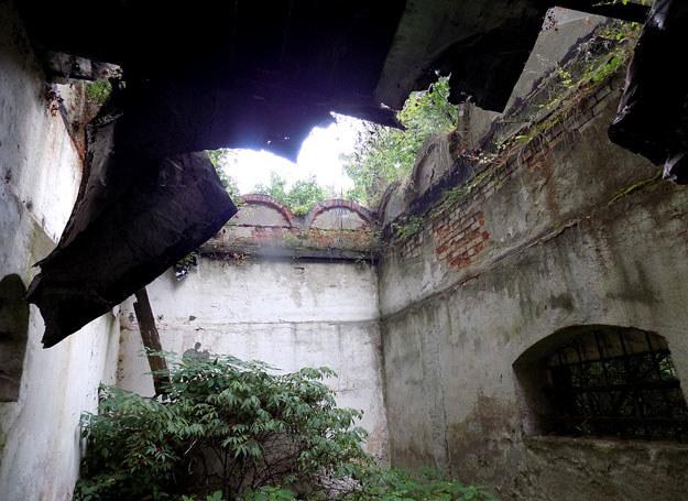 Ruiny budynku ogrodowego – dawnej oranżerii? / Dariusz Pietrucha /Odkrywca
