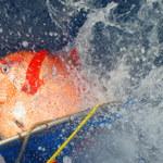 Ryb ciepłokrwistych jest więcej niż myśleliśmy