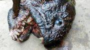 Ryba-mutant? Wyciągnął z wody tajemnicze stworzenie