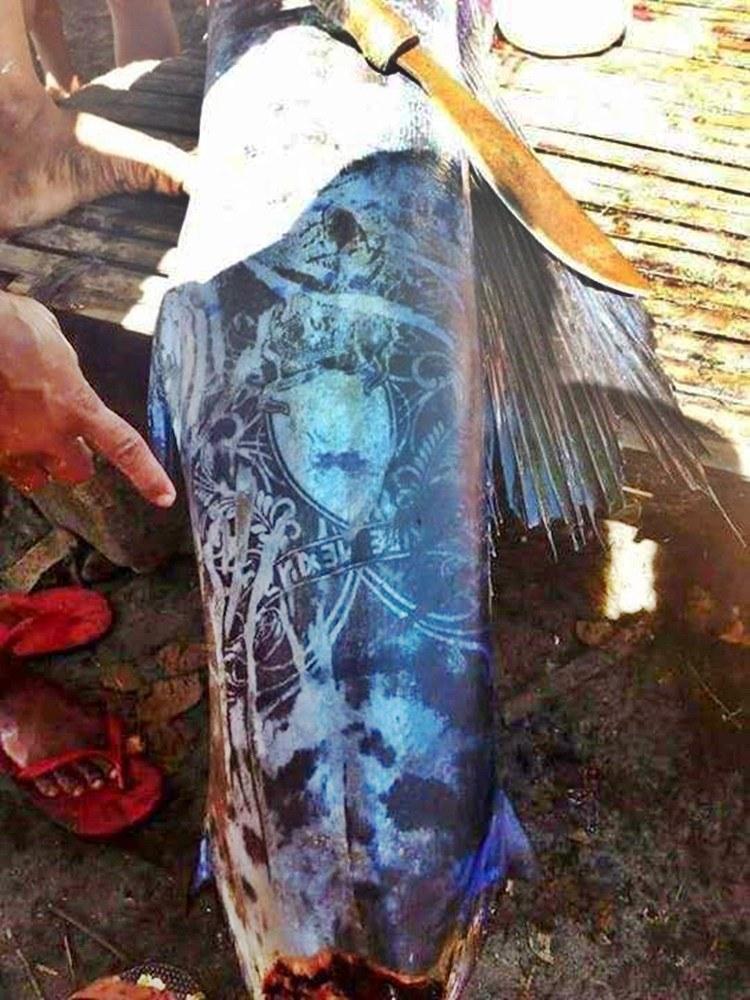 Ryba z tatuażami z Filipin /materiały prasowe