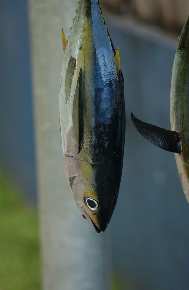 ryby hodowlane /© Photogenica