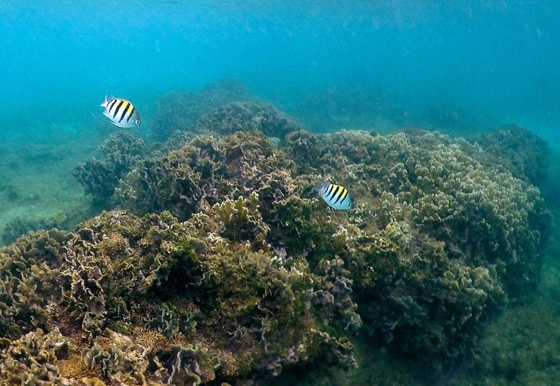 Ryby na tle rafy koralowej. /Luis Acosta /AFP