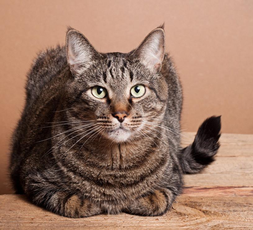 Ryby są dla kota wspaniałym dopełnieniem diety. Niestety, nie wszystkie /123RF/PICSEL