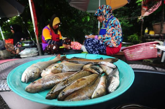Ryby z Tajlandii /AFP