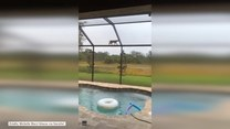 Ryś goni wiewiórkę po szklanym dachu