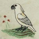 Rysunek kakadu w XIII-wiecznym manuskrypcie. Naukowcy pytają, jak ptak trafił do Europy?