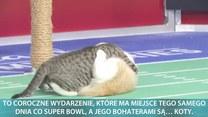 Rywalizacja kotów w słusznej sprawie