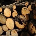 Rząd: Będą kary za wwóz do Polski drewna bez zezwolenia