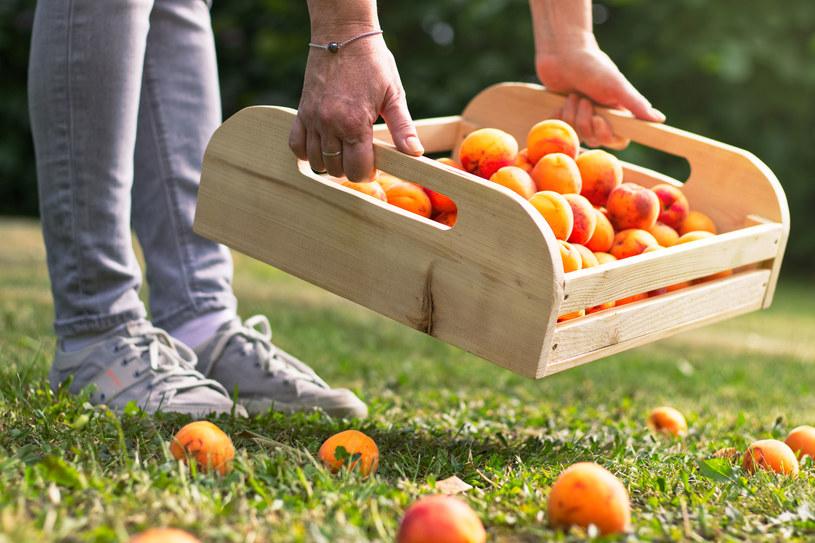 Rząd Hiszpanii zgodził się, żeby rolnikom pomogli imigranci. /123RF/PICSEL