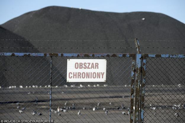 Rząd PiS-u cichcem skupuje węgiel na wielką skalę. Fot. Wojciech Stróżyk /Reporter