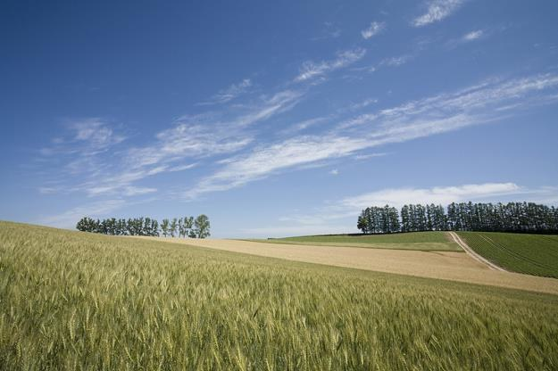 Rząd przyjął projekt ustawy w sprawie obrotu ziemią /© Panthermedia