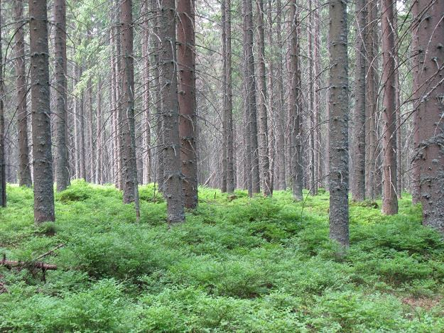 Rząd przyjął propozycje ograniczające nielegalny handel drewnem /INTERIA.PL