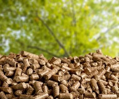Rząd za 20 mld zł zamieni węgiel na biomasę z Indonezji?