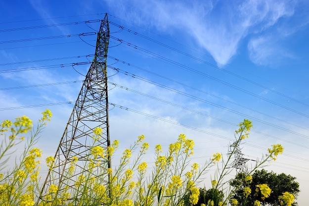 Rządowe dopłaty do rachunków za prąd mają być tylko tymczasowe /©123RF/PICSEL