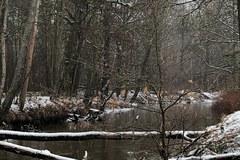 Rzeka Bóbr - raj dla kajakarzy