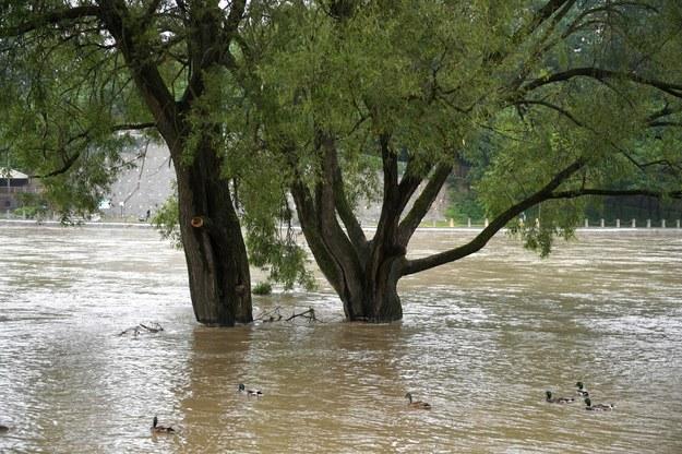 Rzeka San w Sanoku przekroczyła stan ostrzegawczy /Darek Delmanowicz /PAP