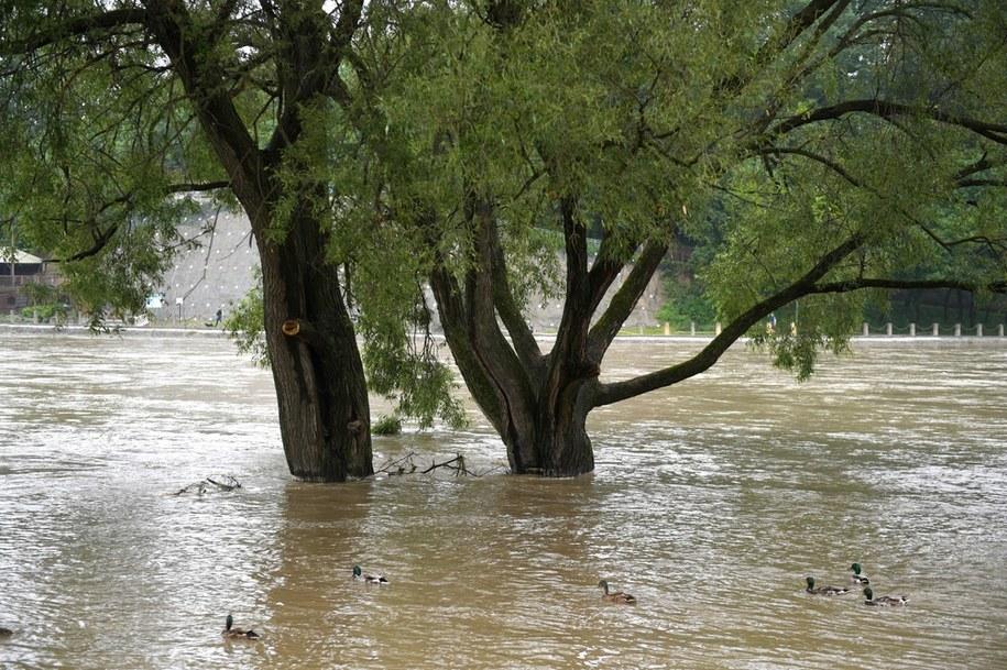 Rzeka San w Sanoku /Darek Delamanowicz /PAP