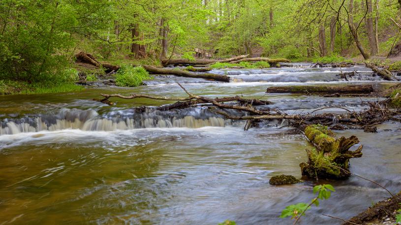 Rzeka Tanew /123RF/PICSEL