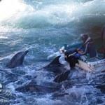 Rzeź delfinów w Japonii