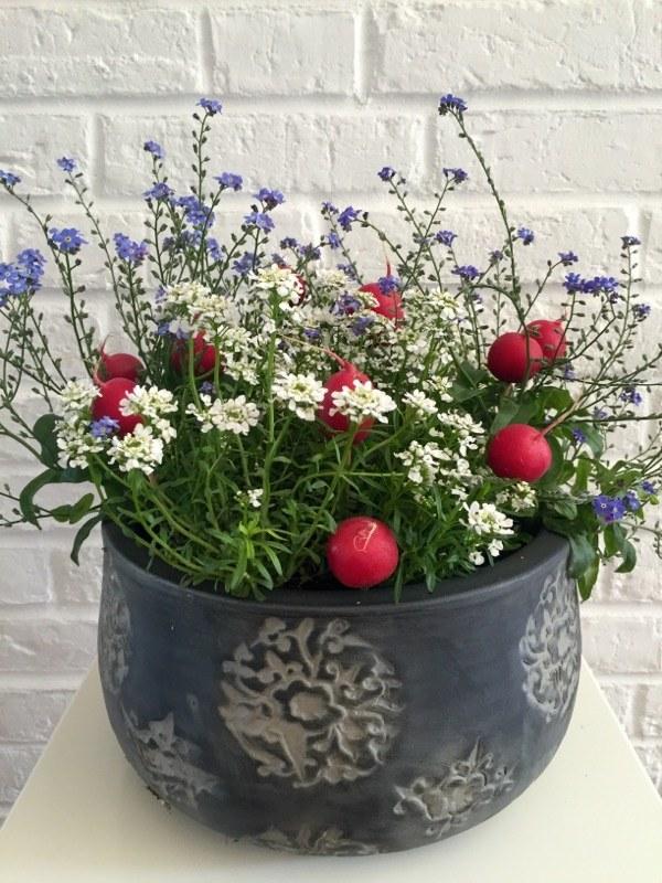 Rzodkiewka w kwiatach /Blog Floresy
