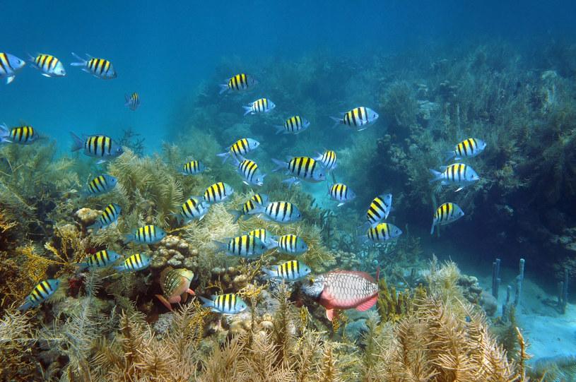 Są tu idealne warunki do nurkowania /123RF/PICSEL