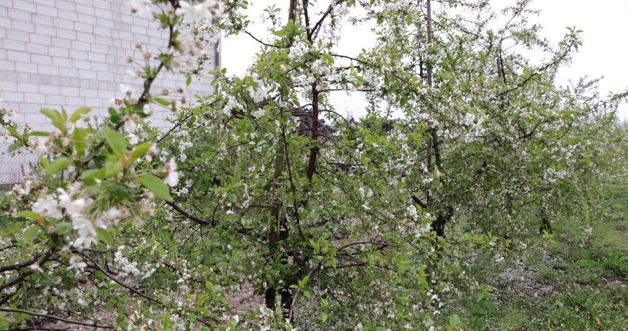Sadownicy z Mazowsza: Ten sezon to dla nas katastrofa