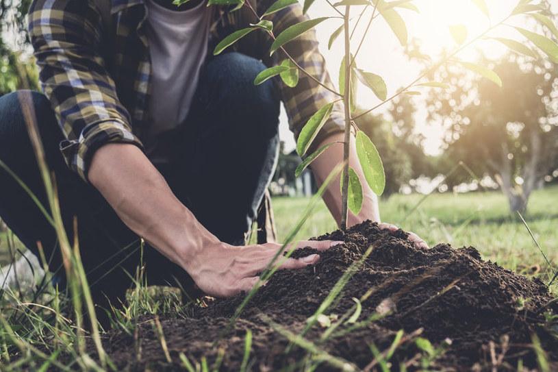 Sadzenie krzewów /©123RF/PICSEL