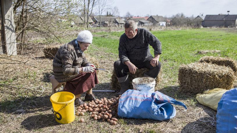 Sadzenie ziemniaków czas zacząć /FOKUS TV