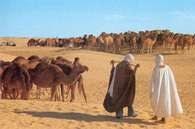 Sahara, Tunezja /Encyklopedia Internautica