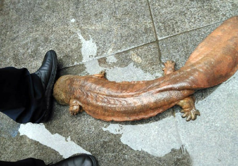 Salamandry mogą osiągać niemal dwa metry długości /CEN/Europics /East News