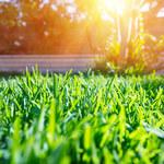 Saletra amonowa: Jak wykorzystać w ogrodzie?